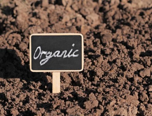 Organic Agriculture Important but not Enough to Meet Global Food Needs
